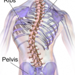 exercises and stretches for scoliosis